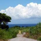 沖縄 石垣島 さとうきび畑に囲まれた道