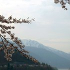 白川郷 桜と雪山